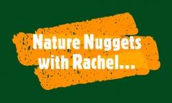 Introducing Nature Nuggets with Rachel!